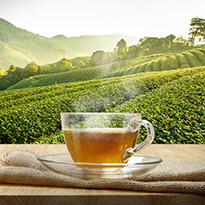 SSS Green Tea Competition with Tribeca Health Supplements
