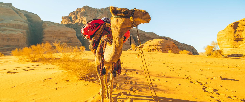 the north face outdoor, Riyadh, Jeddah, KSA